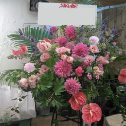 宮坂に贈るお祝いスタンド花 プリティーダリア