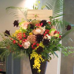 世田谷区に贈るお祝いスタンド花 黒蝶ダリアとアレカヤシ