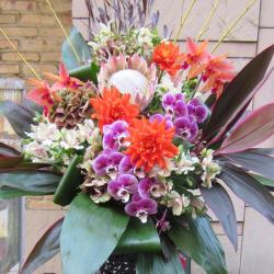 狛江市に贈るお祝いスタンド花 胡蝶蘭と赤ダリア