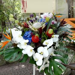 赤坂に贈るお祝い スタンド花 プロテアバード