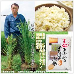 おいしい無農薬 つや姫 玄米