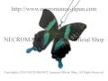 �ڥͥ���ޥ� NECROMANCE�ۥꥢ��Х��ե饤�����ͥå��쥹 Real Butterfly Wing Necklace �㥪����ꥪ�ӥ����ϡ� ij�� ��