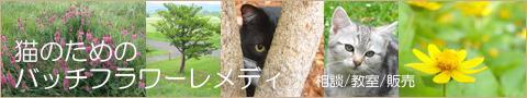 猫のバッチフラワーレメディ