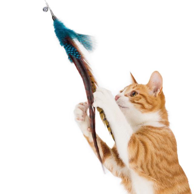 猫と羽じゃらしブルー