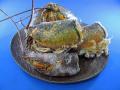 オマール海老の頭(オマールヘッド) 1kg