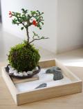 【枯山水×苔玉】〜枯山水セット(三波石)小サイズ+紅長寿梅の苔玉器セット