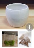 盆栽キット 白