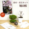 苔玉キット 旭山桜
