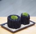 苔炭盆栽20141202m