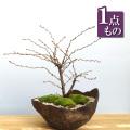 湖上の舞盆栽