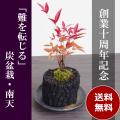 南天盆栽20161207
