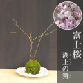 富士桜苔玉楕円白粉引器2017m