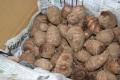★単品★二本松農園の里芋1kg