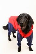 大型犬 レインコート