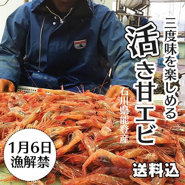活き甘エビ(1匹約15g・15尾入り)能登の海から生きたままお届け