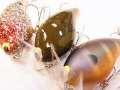 WooDream ウッドリーム 「ノーネイムクランク #1/0」 バサーオールスタークラッシック2012 限定カラー