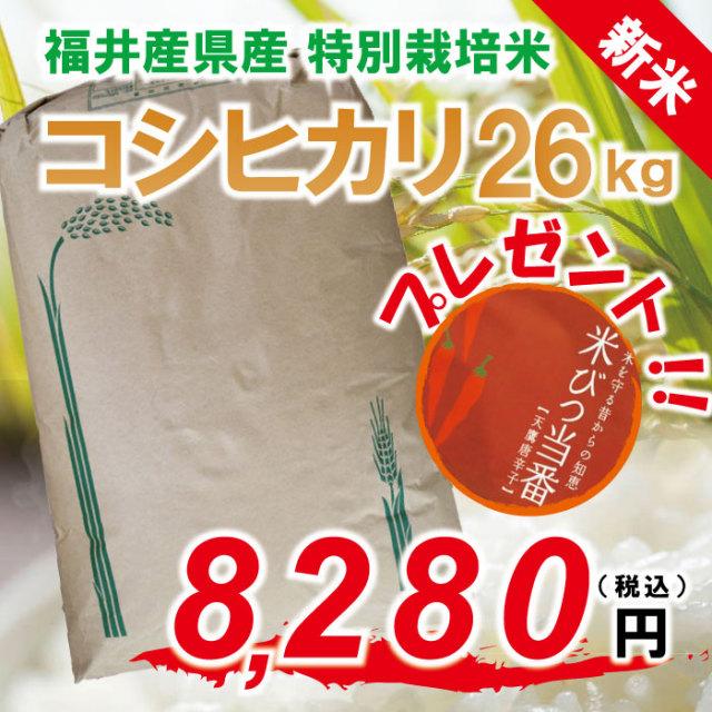 ★ 新米 ★ 28年度 コシヒカリ 白米:約26kg 特別栽培米! 福井県認定エコファーマー!【ポイント5倍】