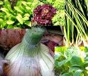 旬の野菜セット、ノーマル2000