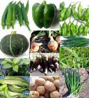 旬の野菜セット(たっぷり3000)オーガニックベジの露地風味