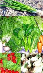 旬の野菜たっぷり3000定期毎週セット4回分(送料込み)