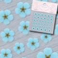 【春ネイル】【Pieadra64138】ピアドラ/押し花ネイルシール4ブルー