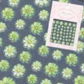 【春ネイル】【pieadra74535】ピアドラ/プリマベーラライム