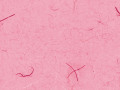 フウビ ピンク