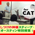 Errorless!〜何歳からでも始められる失敗しない愛猫のトレーニング