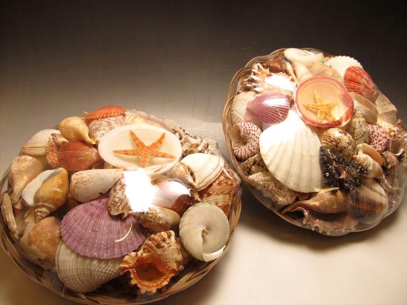 貝殻シェル