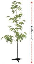 AT-T3500 特大笹竹