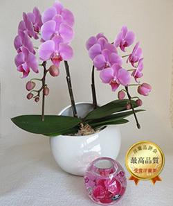 ダイヤモンド胡蝶蘭キャンドルセット