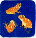 カエル博士(Dr.Frog)タオルハンカチ アルグスガエル