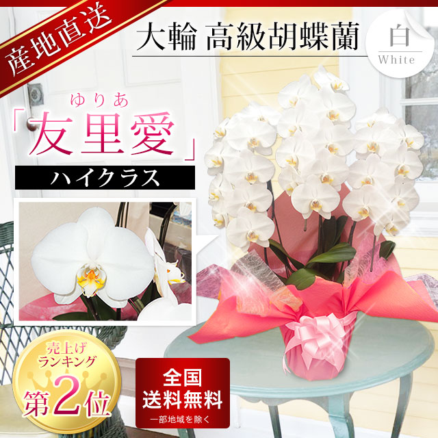 誕生日2位の胡蝶蘭