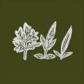Ueno Takashi / Variations Of Weeds
