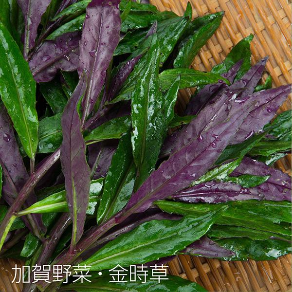 加賀野菜・金時草