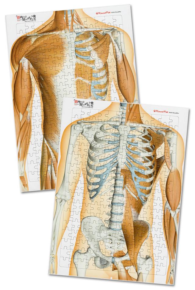 【解剖学ジグソー】体幹の筋セット(表層・深層2枚組)