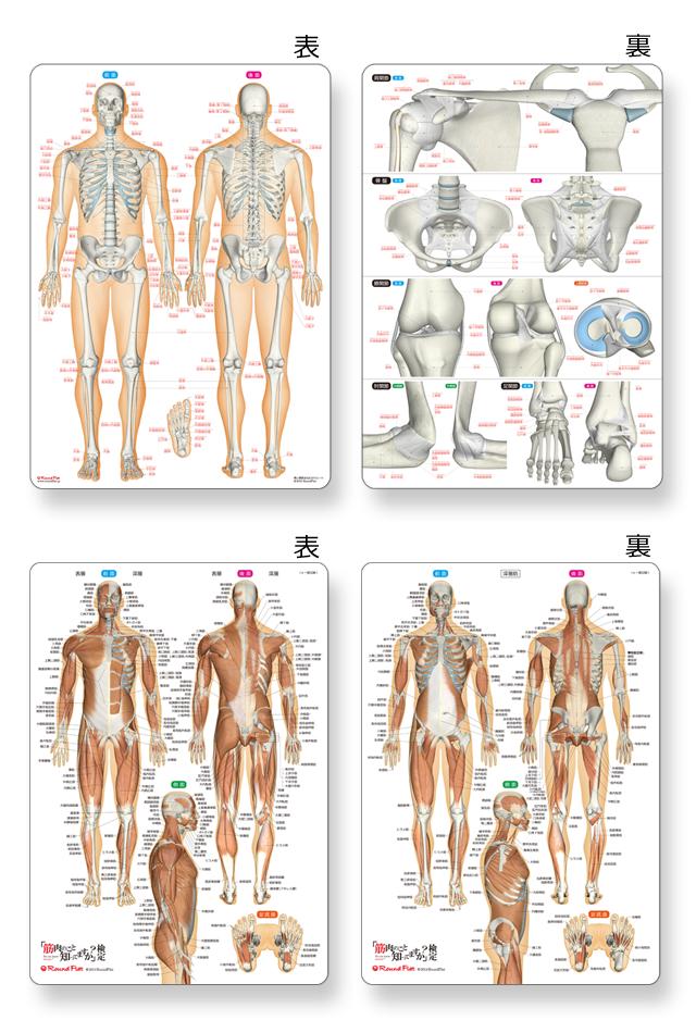【グッズ】骨と関節&筋肉まるわかりシートセット【特価】