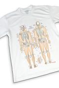 【解剖学Tシャツ】骨チャートデザイン《筋Tシリーズ》