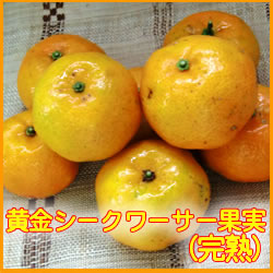 沖縄県産・黄金シークワーサー果実(完熟)