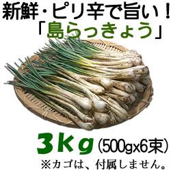 島らっきょう3kg(500gx6束)-【沖縄県産/新鮮・土付き】-沖縄島野菜・沖縄土産