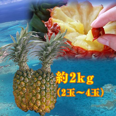 【送料無料】沖縄県島産のスナックパイン約2kg(2玉~4玉)