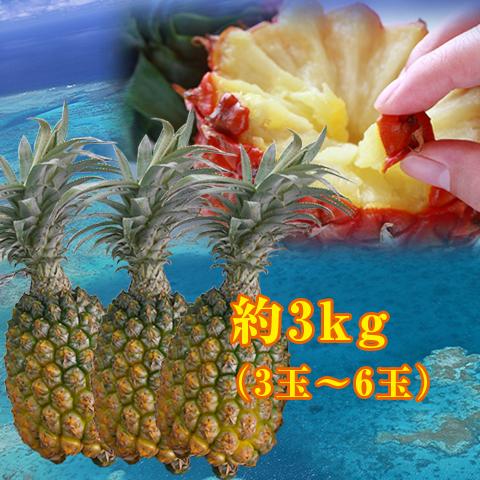 【送料無料】沖縄県産のスナックパイン約3kg(約3玉~6玉)