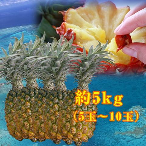 【送料無料】沖縄県島産スナックパイン約5kg(約5玉~10玉)