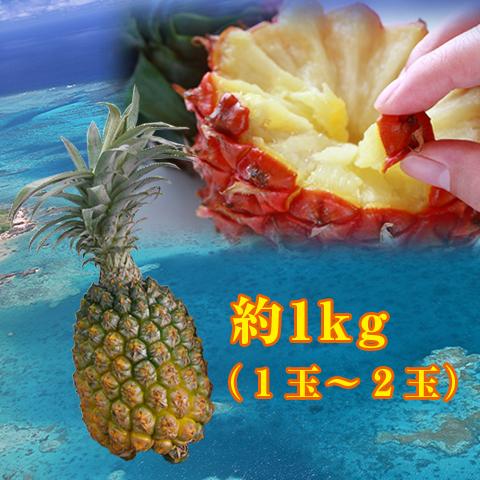 【送料無料】沖縄県産のスナックパイン約1kg(1玉~2玉)