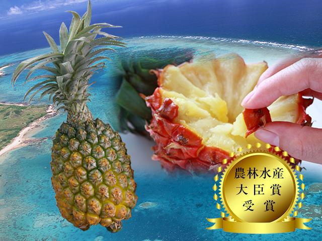 【送料無料】【予約販売】沖縄県石垣島産-當銘さんの絶品スナックパイン約1kg(約1玉~2玉)