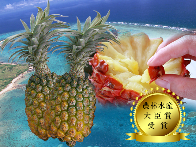 【送料無料】【予約販売】沖縄県石垣島産-當銘さんの絶品スナックパイン約2kg(約2玉~4玉)
