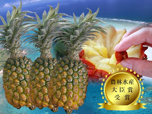 【送料無料】【予約販売】沖縄県石垣島産-當銘さんの絶品スナックパイン約3kg(約3玉~6玉)