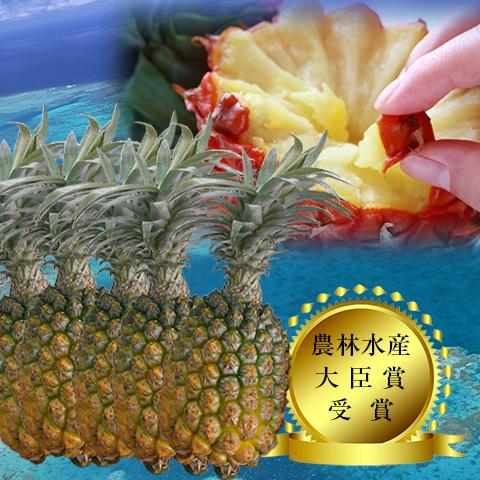 【送料無料】【予約販売】沖縄県石垣島産-當銘さんの絶品スナックパイン約5kg(約5玉~10玉)