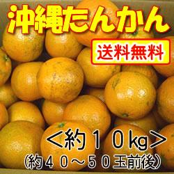 【送料無料】沖縄山原(やんばる)産・平川さんのこだわりたんかん約10kg
