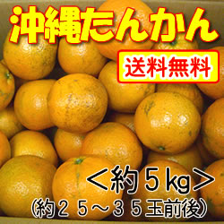 【送料無料】沖縄山原(やんばる)産・平川さんのこだわりたんかん約5kg